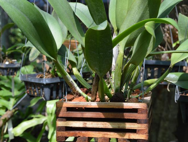 Pflanze im Holzkübel