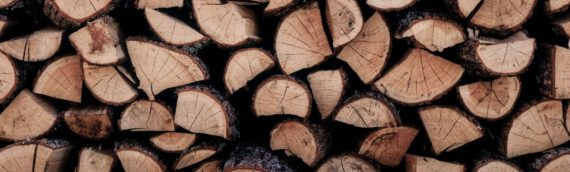 Kirschholz kaufen – Infos u Preis, Eigenschaften und Verwendung